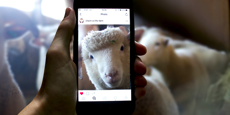 Instagram for Marketing to Farmers